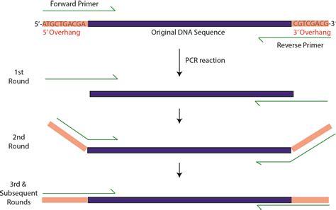 pcr primer design overhang pcr bitesize bio