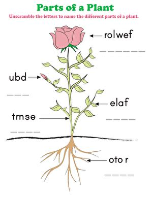 parts of a plant worksheet education