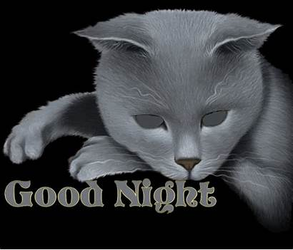 Night Goodnight Animated Gifs Funny Wallpapers Cat