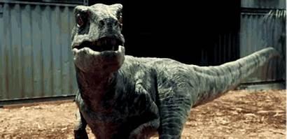 Jurassic Velociraptors Absurdity Velociraptor Raptor Dinosaur Dinosaurs