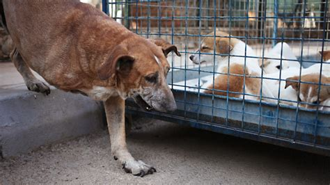 animal abuse cases spur crackdown  singapore south