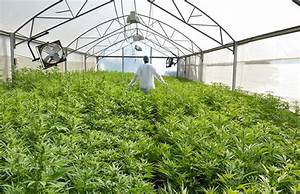 World's Largest (Legal) Cannabis Grow Coming to Canada ...
