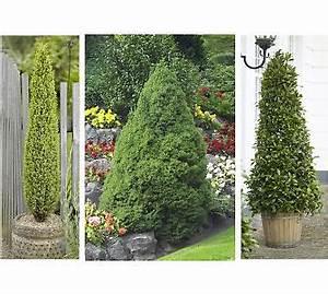 Sträucher Für Garten : immergr ne str ucher f r einen sch nen garten auch im winter ebay ~ Buech-reservation.com Haus und Dekorationen