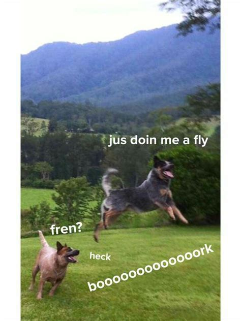 Bork Memes - 1000 images about bork memes on pinterest what is this dog park and something awful