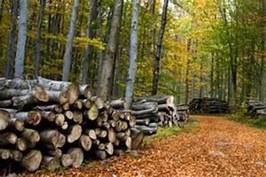 Holz Gewicht Berechnen : spezifisches gewicht von holz brennholz dichte holz ~ Themetempest.com Abrechnung