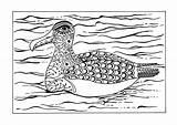 Coloring Albatross Arctic Adult Animal Winter Animals Printable Snow sketch template