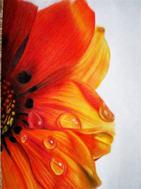 Coloring Flowers With Colored Pencils by 40 Beautiful Flower Drawings And Realistic Color Pencil