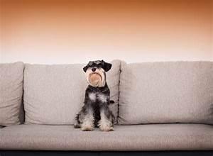 Hundehaare Vom Sofa Entfernen : hundehaare effektiv vom sofa entfernen frag mutti ~ Bigdaddyawards.com Haus und Dekorationen