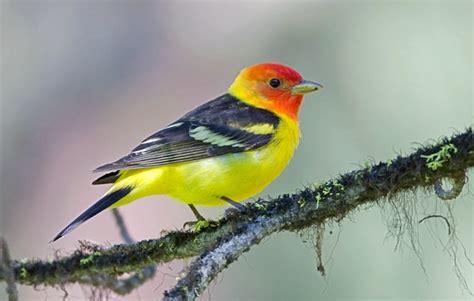 tom kogut photography pacific northwest birds western