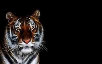 Tiger Wallpapers Tigre Tygrys Animal Leon Sfondi