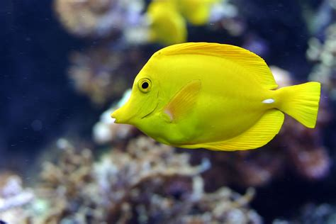 sea fish wallpaper osabelhudosec