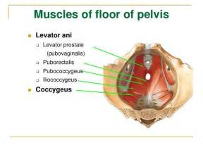 pelvic floor dysfunction symptoms treatment what is