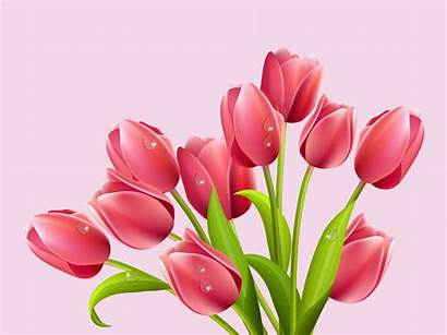 Tulips Vector Clipart Graphics Clip Flowers Cliparts