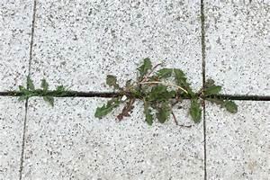 Unkraut In Fugen Entfernen : fugen unkraut entfernen unkraut aus fugen entfernen frag ~ Lizthompson.info Haus und Dekorationen