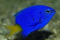 aquarium fish  thrissur kerala aquarium balamash