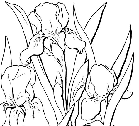 Free Adult Floral Coloring Page The Graphics Fairy