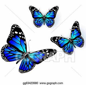Butterfly Drawings With Color Blue