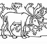 Elk Coloring Coloringcrew sketch template