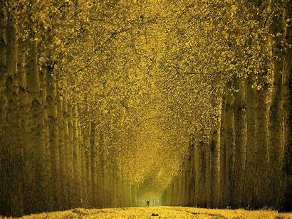 Autumn Landscape Lined Trail Tree 10wallpaper