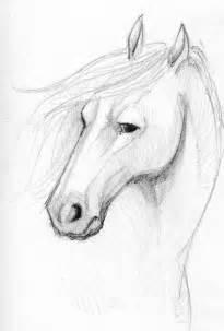 Horse Face Sketch