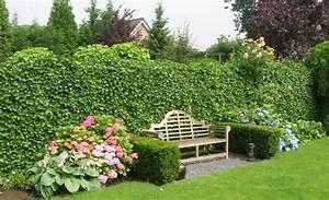 anleitung pflanztipps hecke pflanzen pflanzen saen With französischer balkon mit garten klapptisch rund