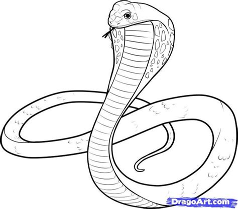 snake drawings  kids king cobra coloring pages