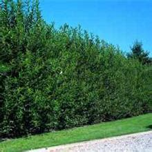 fast growing fence cover 3 secrets to double the growth rate of your plants fast growing trees com