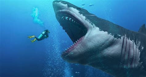 Biggest Megalodon Shark