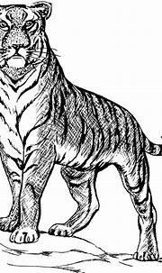 Tiger Animal Biology · Free vector graphic on Pixabay