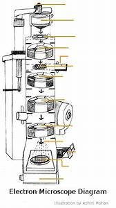A Study Of The Microscope And Its Functions With A Labeled