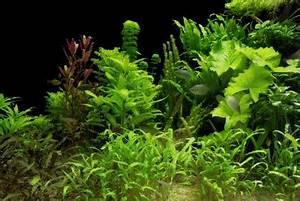 Pflanzen Für Aquarium : garnelen bringen farbe ins aquarium yellowfire garnelen ~ Buech-reservation.com Haus und Dekorationen