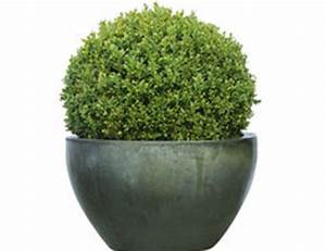 Buchsbaum Rund Schneiden : buchsbaum hat braune bl tter ursachen und abhilfe ~ Frokenaadalensverden.com Haus und Dekorationen
