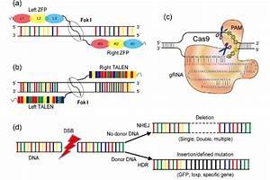 Color Online  Schematics Summarizing The Mechanisms Of