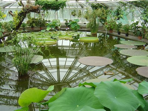 Botanischer Garten Berlin by File Botanical Garden Berlin House Flo Jpg