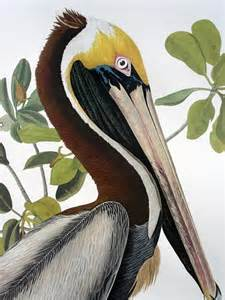Audubon Prints Birds of America