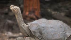 Top 10 Recent Extinct Animals - No More of these Extinct ...