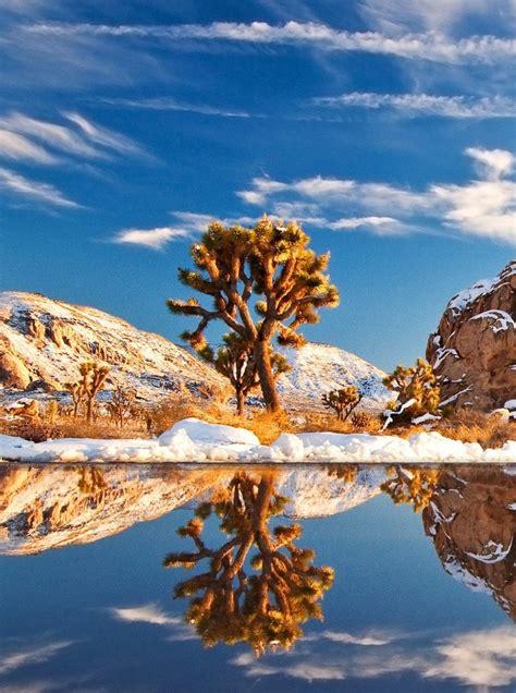 joshua tree national park  california usa  wow style
