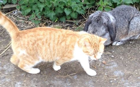 Farm Barn Cat For Adoption Cats For Adoption In Lucan