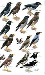 Vogelgids India - Nepal