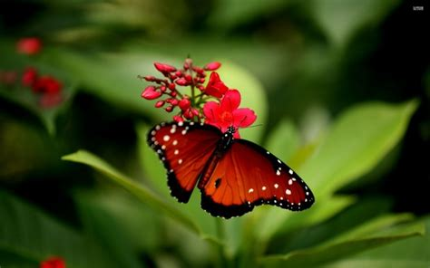 Flower Butterfly Wallpaper