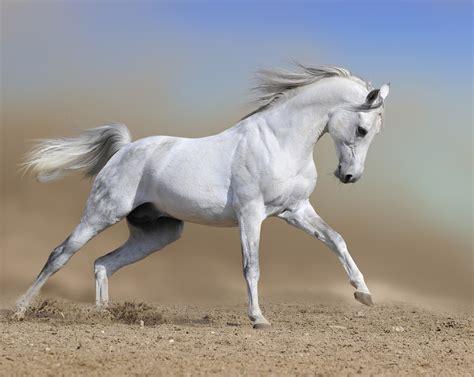 perfume review amouage ubar  white floral stallion