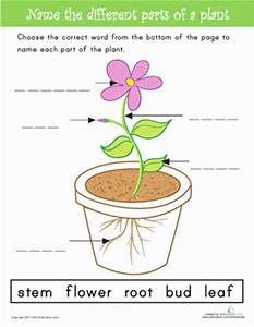 Name the Parts of a Plant | Worksheet | Education.com