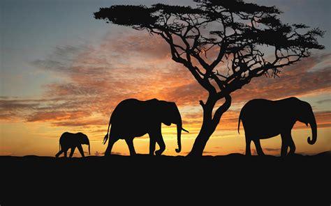 Animal Silhouette Wallpaper - wallpaper savanna elephants sunset silhouette