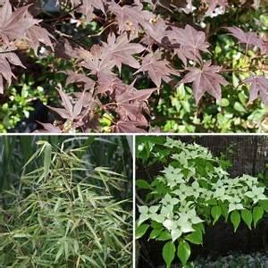 Pflanzen Für Japangarten : fertige pflanzen sets f r ihren garten native plants ~ Sanjose-hotels-ca.com Haus und Dekorationen