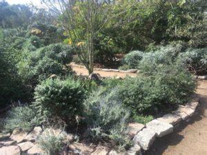 Secret Garden Central Park by Hb Treescentral Park Quot Secret Garden Quot Hb Trees