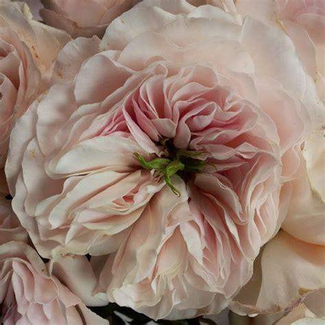 david garden roses charity garden rose flirty fleurs the florist blog inspiration for floral designers