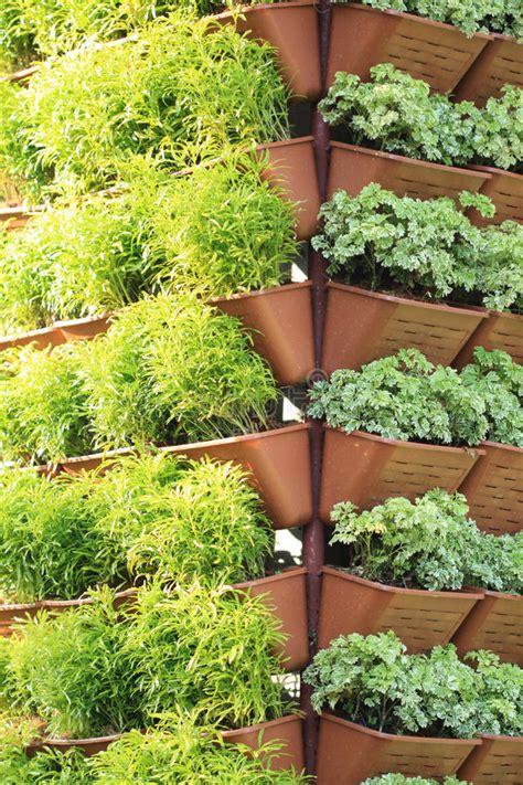 Vertikaler Garten Stockfoto  Bild 41646095