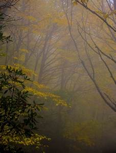 Misty, Forest, Wallpapers, 50, Hd, Free, Images, To, Download