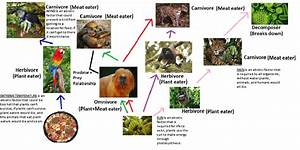 Rainforest Food Chain Pictures to Pin on Pinterest - PinsDaddy