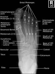 Foot X